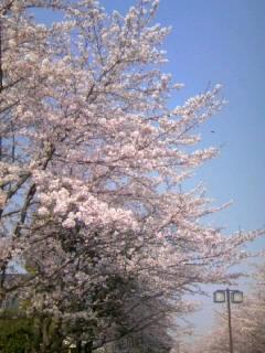 春ですなぁ♪