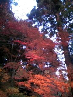 紅葉綺麗♪