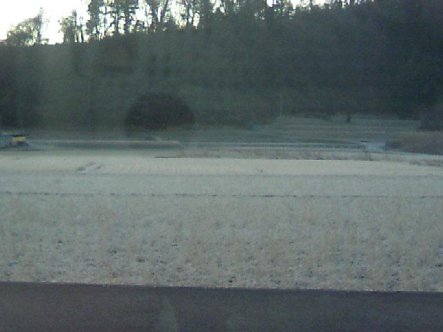 霜が降りてるね