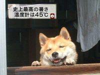 Photo_570